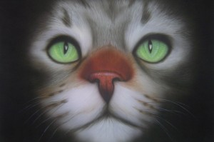 Mooie grijze kat